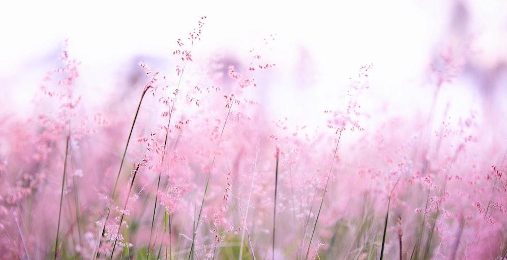 yurtdışına çiçek gönderme
