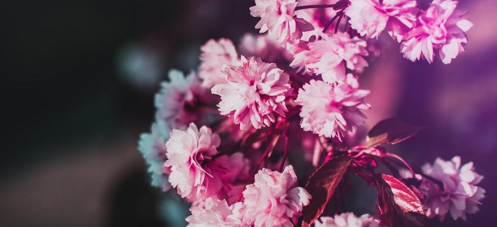 yurtdışına nasıl çiçek gönderilir